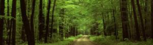 Bosque en la naturaleza